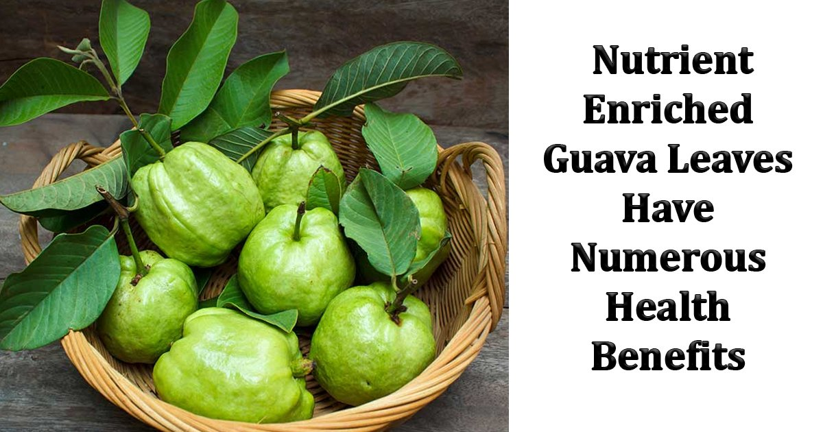 wfasff.jpg?resize=412,232 - Did You Know That Nutrient Enriched Guava Leaves Have Numerous Health Benefits