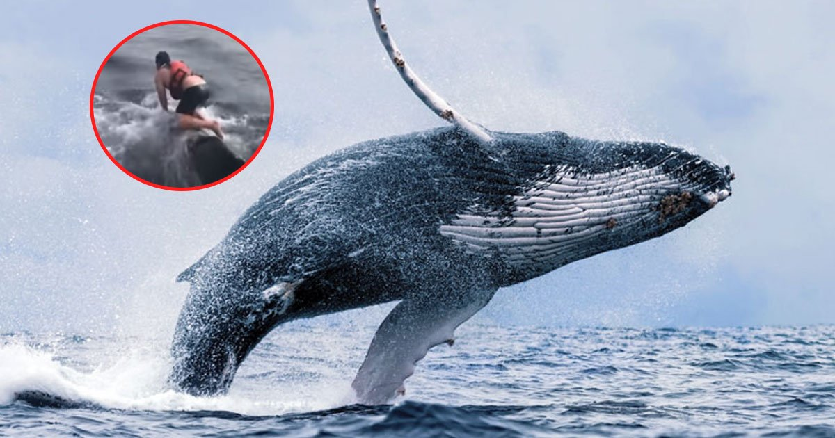 whale rescued.jpg?resize=1200,630 - Fisherman Jumped Into The Ocean And Climbed On A Humpback Whale's Back To Save It
