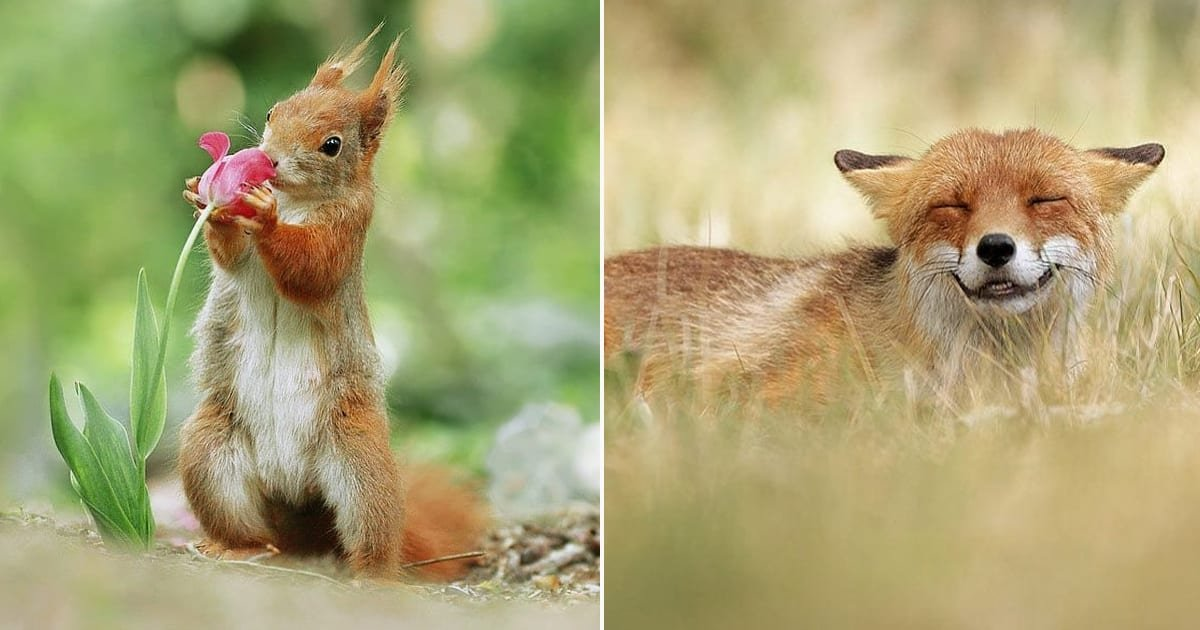 wildlife photos.jpg?resize=636,358 - 40+ Adorably Playful Wildlife Photos By Photographer Julian Rad