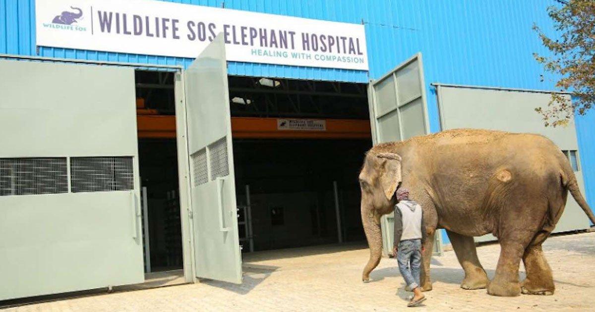 wildlife sos hospital.jpg?resize=412,232 - Wildlife SOS - India's First Ever Hospital For Rescued Elephants - Saves And Treats Wild Elephants