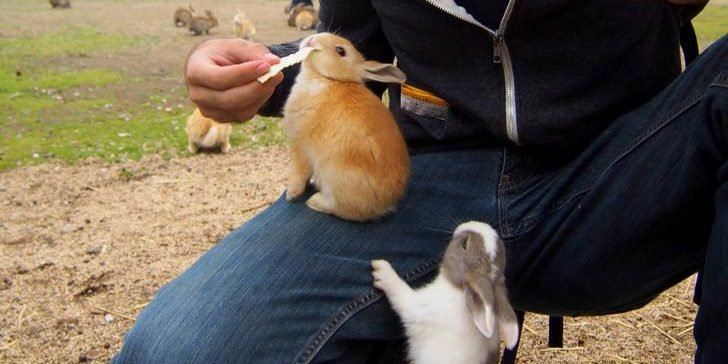 xfbsddi e1556435439999.jpg?resize=412,275 - 55 Adorable Pictures of Bunnies That Will Boost Up Your Energy For The Day