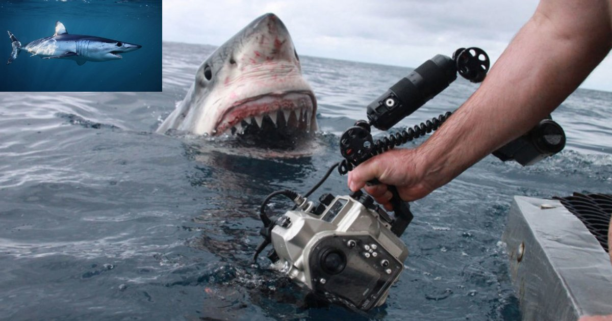 y1.png?resize=412,232 - Un requin massif trouvé sur la côte australienne avec une particularité inhabituelle