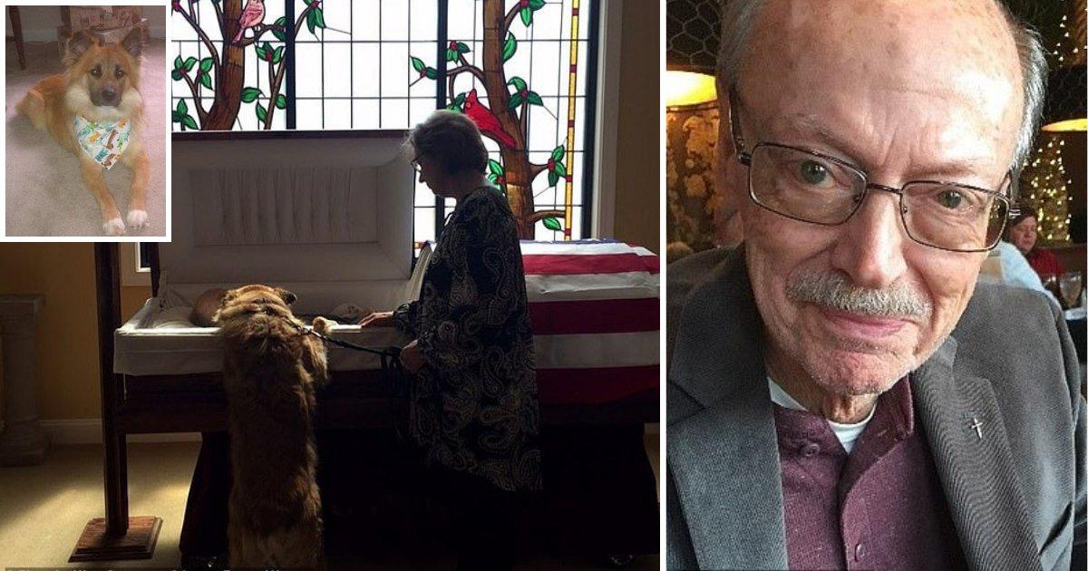 y2 15.png?resize=1200,630 - Une photographie touchante montre un chien sur ses pattes arrières, appuyé sur le cercueil de son propriétaire pour lui faire ses adieux