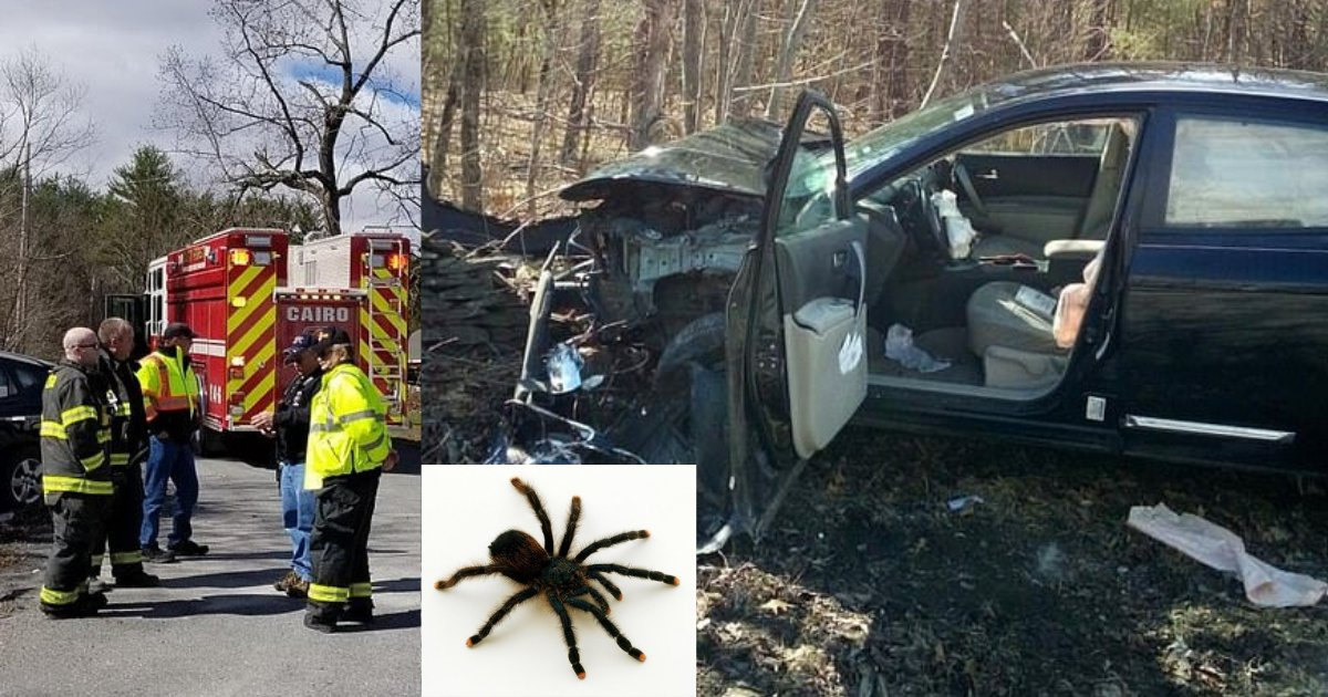 y2 8.png?resize=1200,630 - Woman In New York Hit Stone Wall Seeing A Spider In Her Car