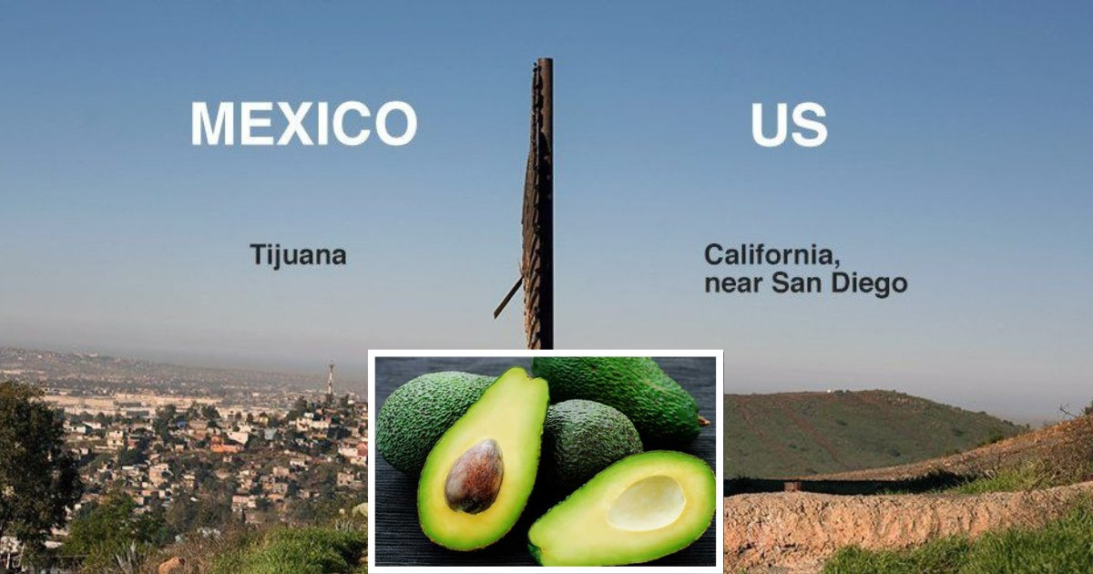 y3 2.png?resize=1200,630 - Avocados Crisis Will Arise In the US If Mexico Border Closes