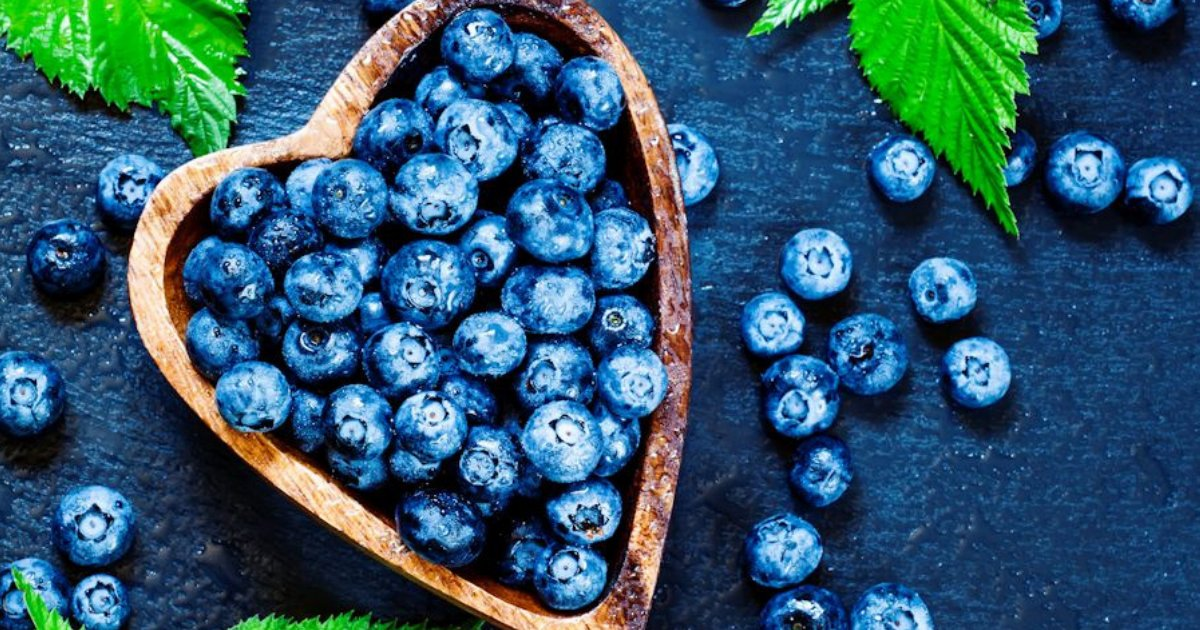 y3 22.png?resize=1200,630 - Blueberries: The Aid for Your Eyes and Brain