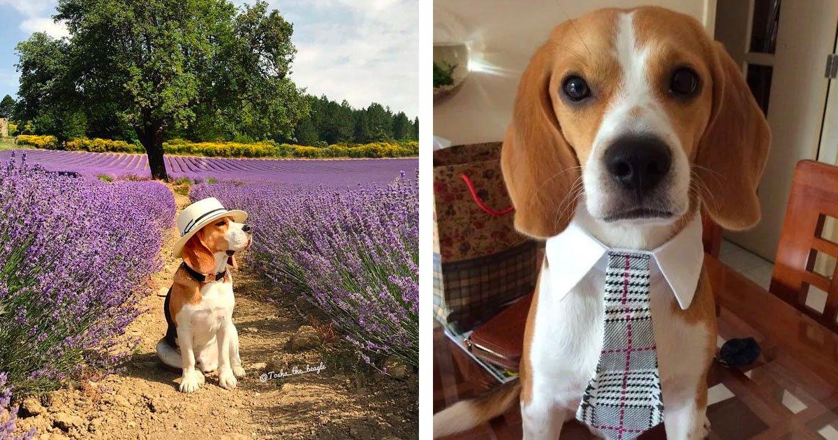 1 47.jpg?resize=412,232 - 20 Razones adorables para tener un perro Beagle en tu vida