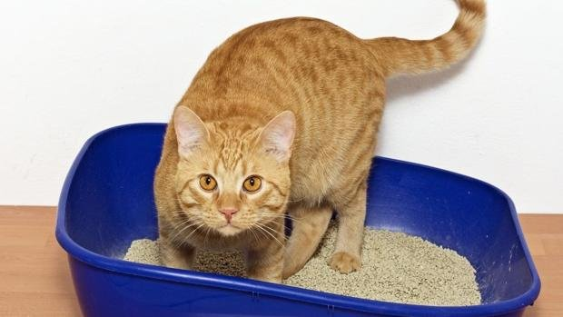 Resultado de imagen de gato raspando suelo