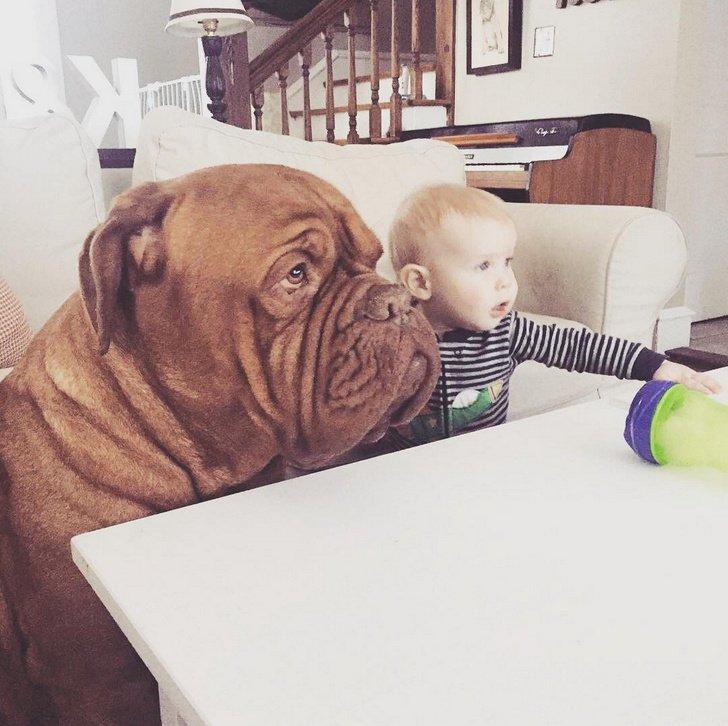 10 Mejores razas de perros para familias con niños (las opciones menos obvias)