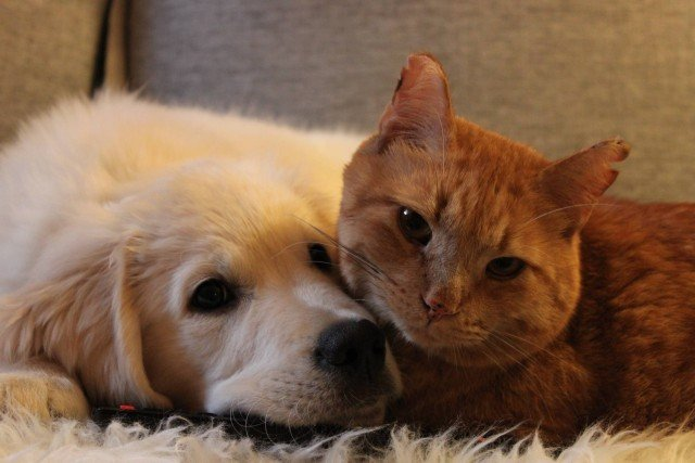 Resultado de imagen de cats and dogs friends