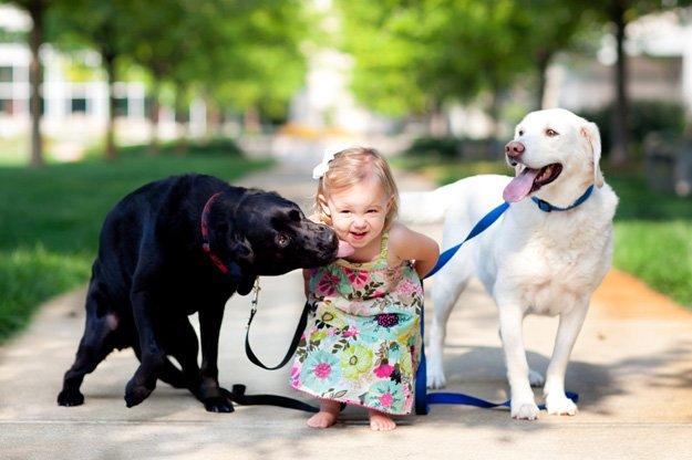 Resultado de imagen de Labrador kids