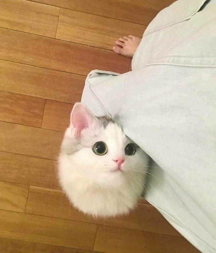 12Hábitos extraños delos gatos que por fin tienen una explicación