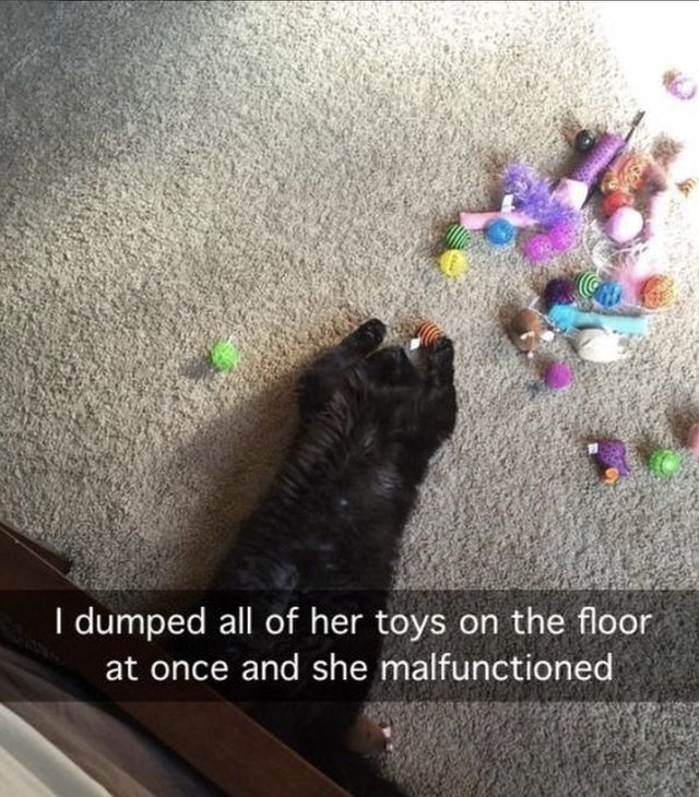 Cat with all her toys on the floor