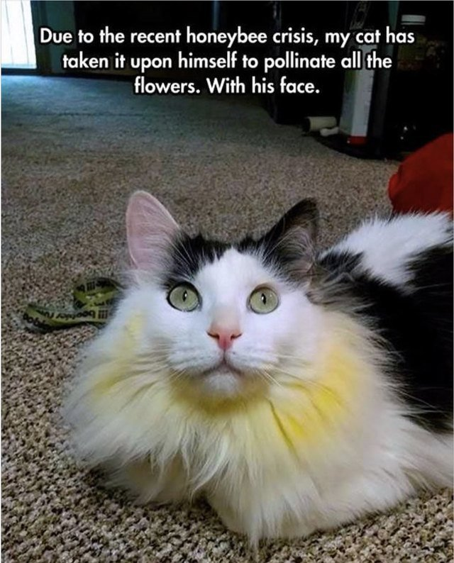 Cute cat with pollen all over his face