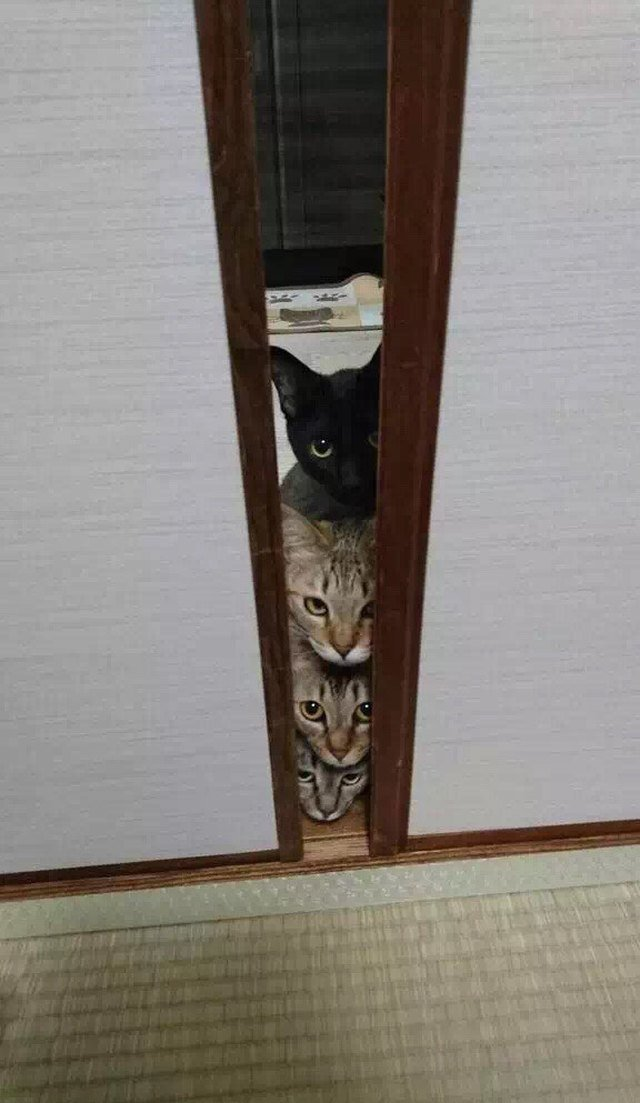 Four cats peeking out from behind door crack