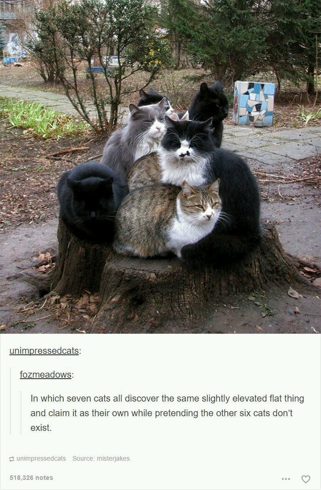 Seven cats crowded on the same tree stump