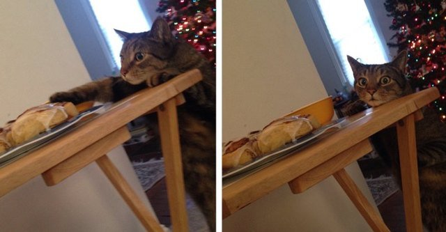 Cat tries to sneak food off of the table