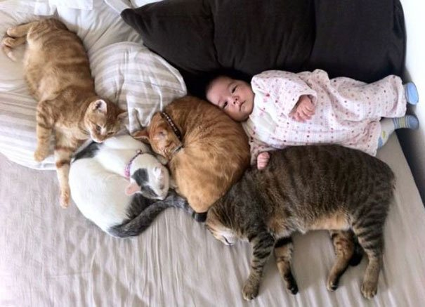 crianças-com-gatos-20