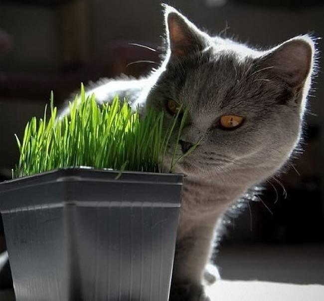 dicas-para-donos-de-gatos-15