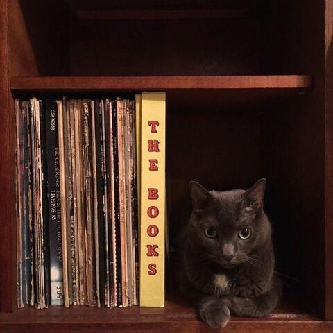dicas-para-donos-de-gatos-24