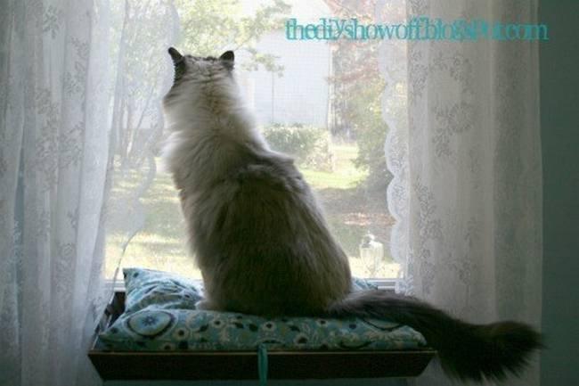 dicas-para-donos-de-gatos-8