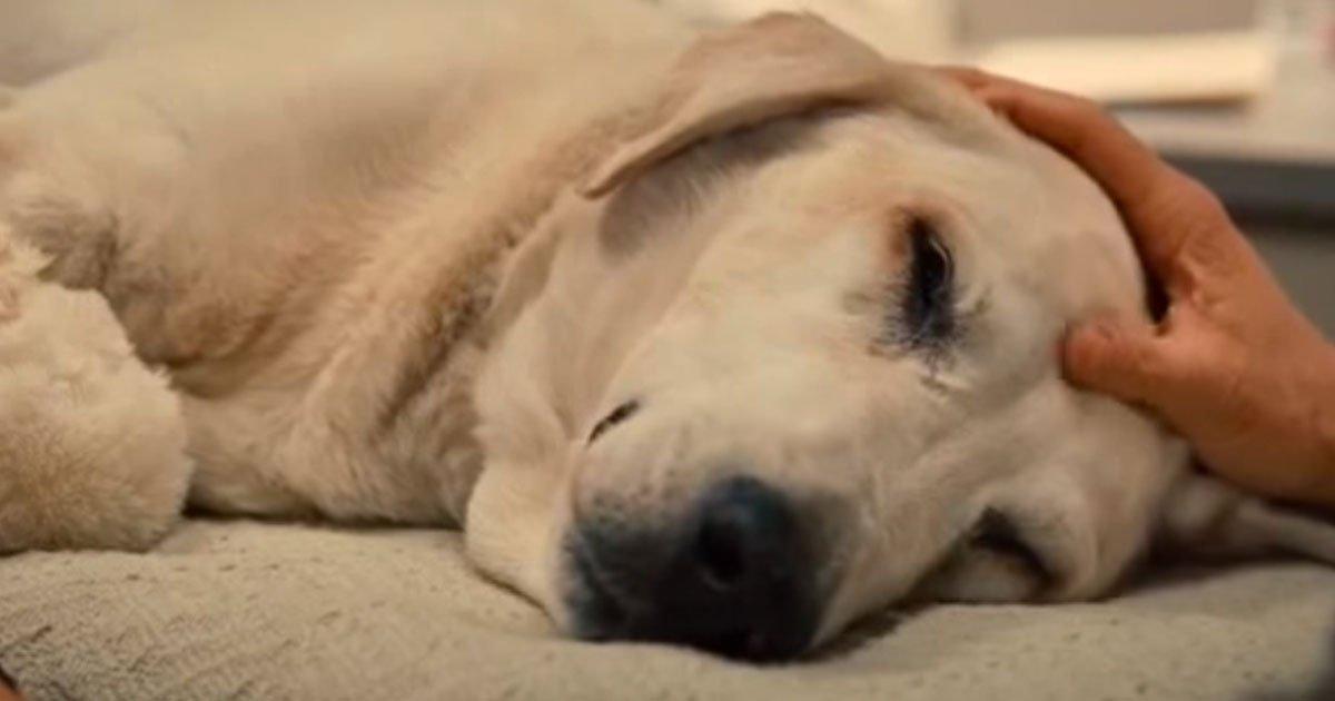 3 48.jpg?resize=412,232 - Veterinario revela lo que hacen las mascotas minutos antes de partir