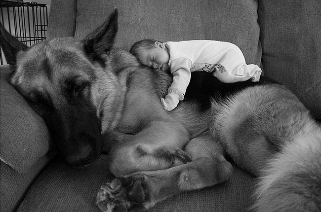 crianças-com-cães-1