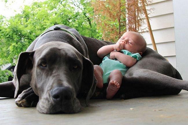 crianças-com-cães-13
