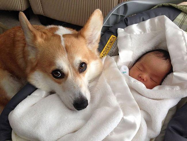 crianças-com-cães-18