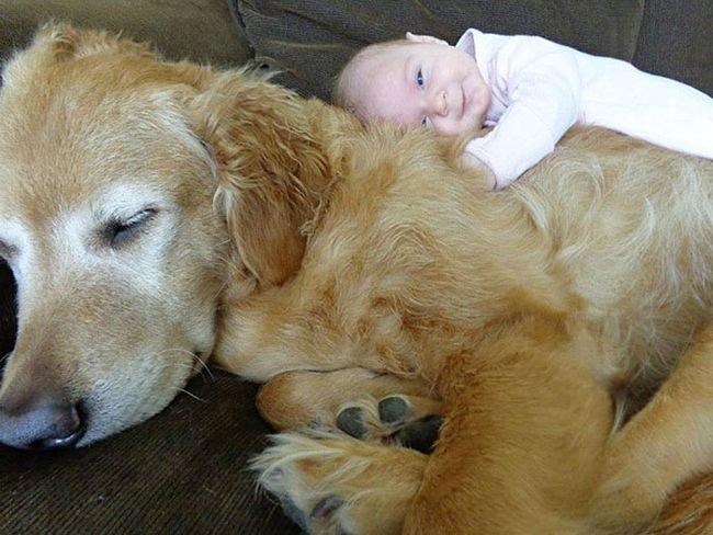 crianças-com-cães-2