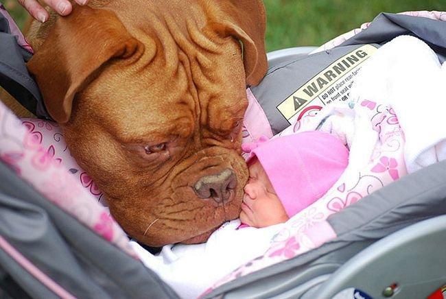 crianças-com-cães-8