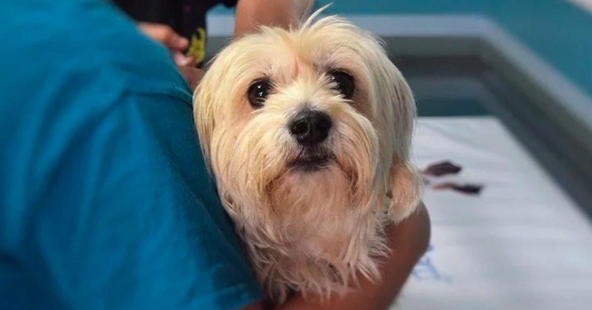 4 32.jpg?resize=412,232 - Un veterinario revela lo que sienten los perros antes de partir