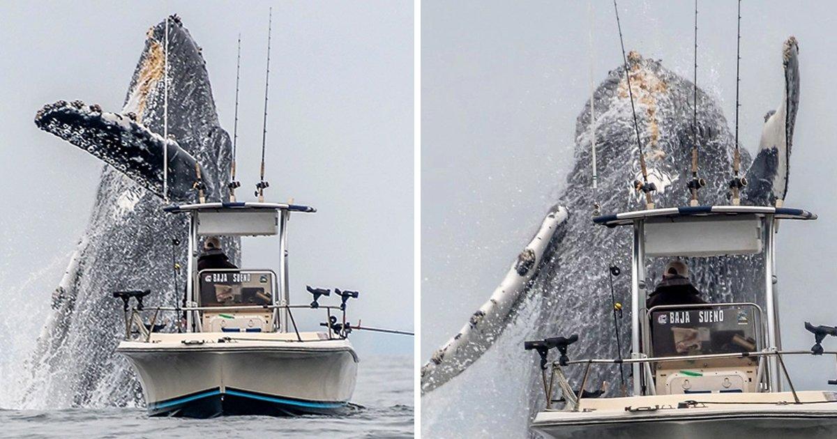 8 48.jpg?resize=1200,630 - 거대한 고래가 어선 바로 옆에서 튀어오르는 진귀한 광경 (영상)