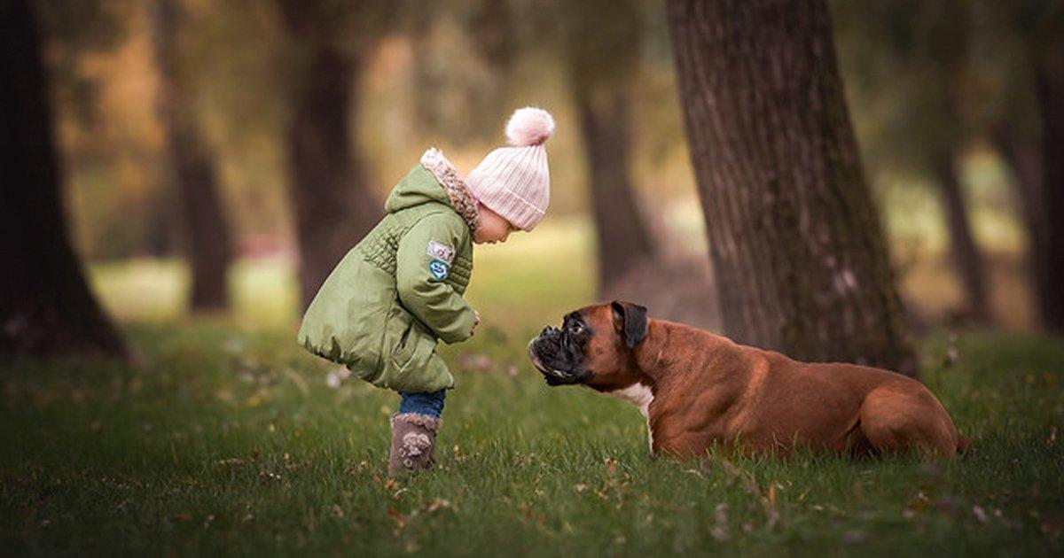 8 79.jpg?resize=1200,630 - 10 Mejores razas de perros para familias con niños (las opciones menos obvias)