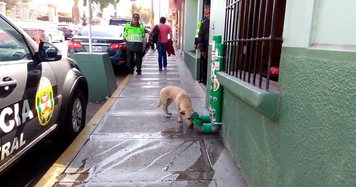 a 6.jpg?resize=1200,630 - Police Installed 'Special' Food And Water Dispensers Outside The Police Stations For Stray Dogs