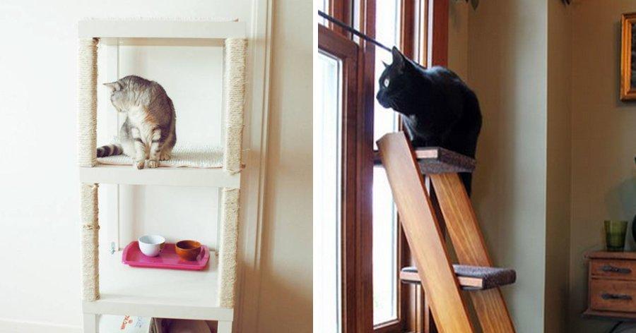 a6 1.jpg?resize=1200,630 - 22 Truques que todas as pessoas que têm gatos precisam saber