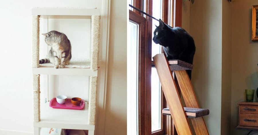 a6 1.jpg?resize=412,232 - 22 Truques que todas as pessoas que têm gatos precisam saber