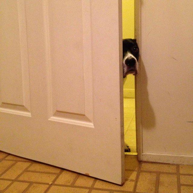 Dog poking its head through ajar door.