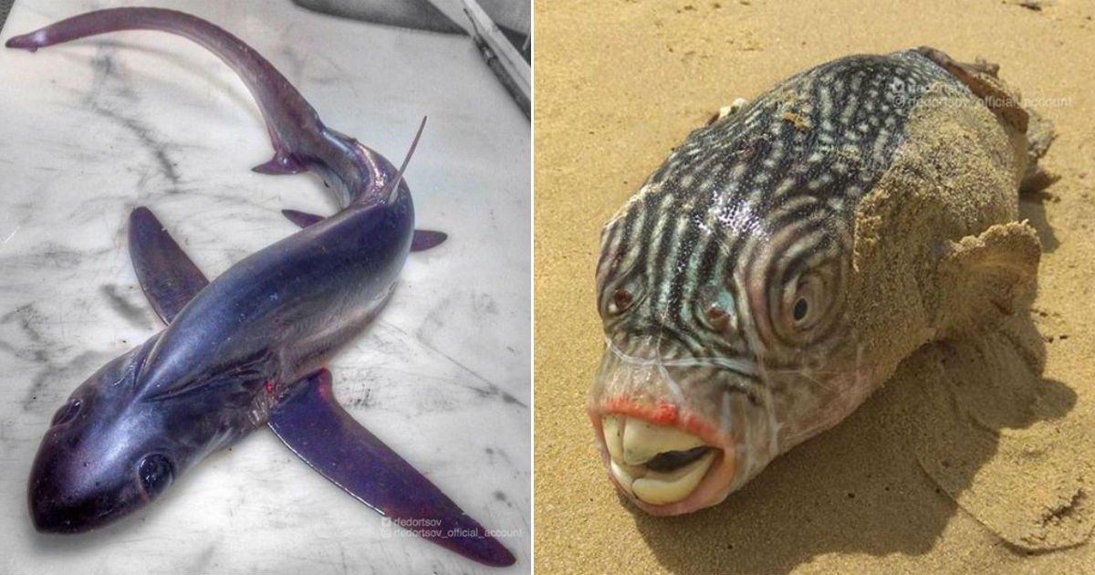 anf.jpg?resize=412,275 - 원양어선에서 17년간 일하며 발견한 '신기한' 모습의 물고기들 TOP18