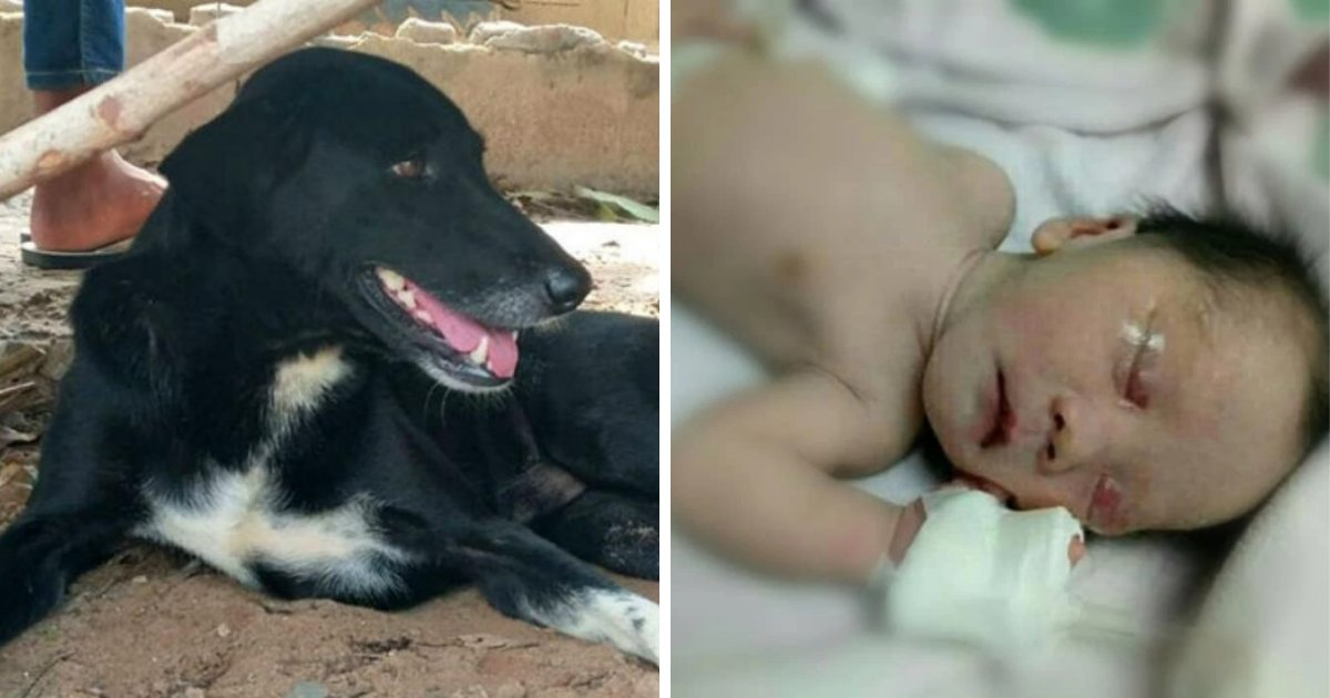 babyboy 1.png?resize=1200,630 - Disabled Dog Rescues Baby Boy After 15-Year-Old Mother Buried Him Alive In Field