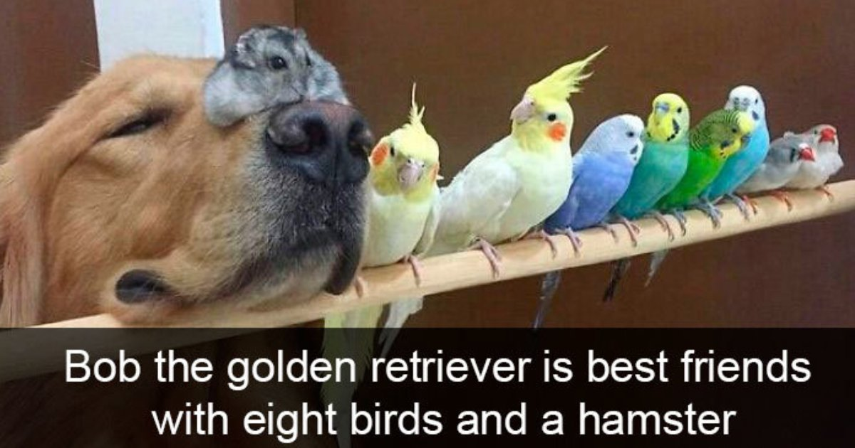 bird snapchats.png?resize=412,232 - 25+ Hilarious Snapchats Of Birds Being Ridiculous
