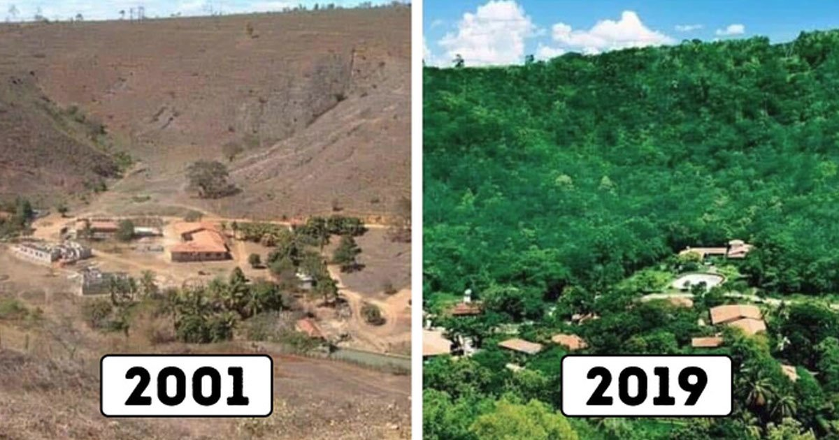 couple restored forest.jpg?resize=1200,630 - Couple Spent 20 Years Planting Trees To Restore A Destroyed Forest