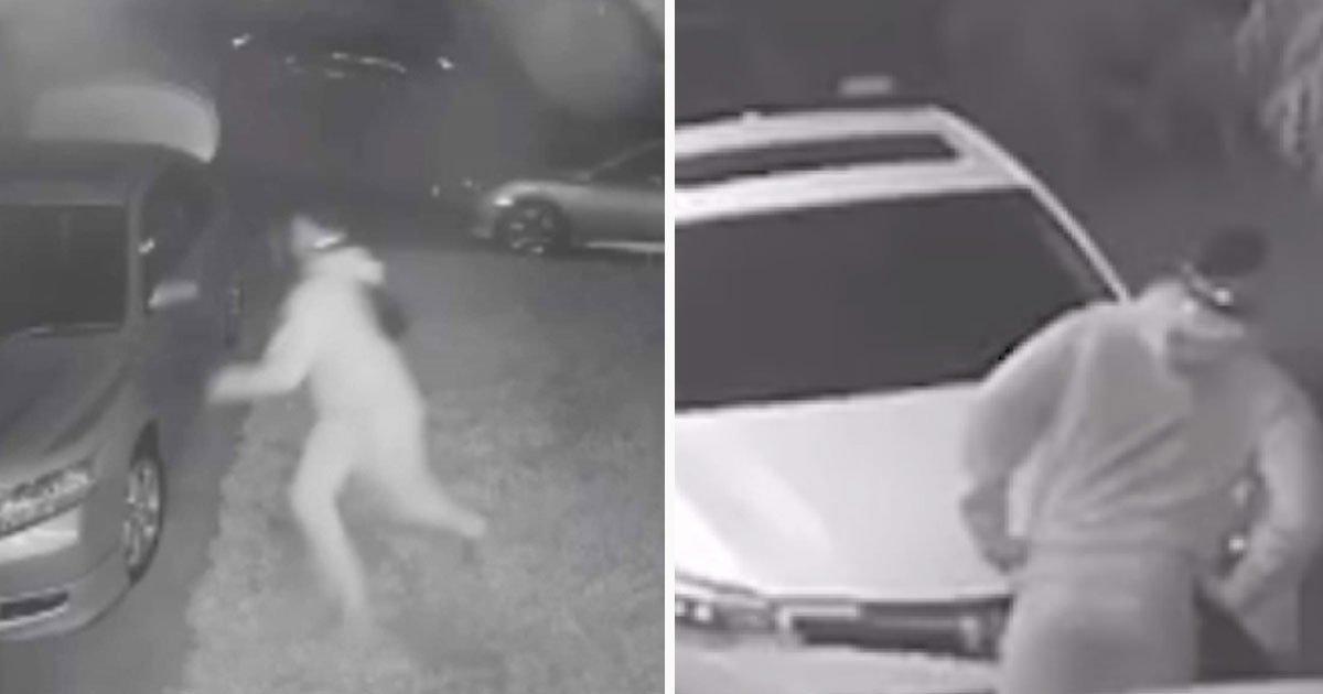 coyote chased thief.jpg?resize=412,232 - Un coyote a empêché un cambrioleur de voler dans la voiture d'un homme au milieu de la nuit