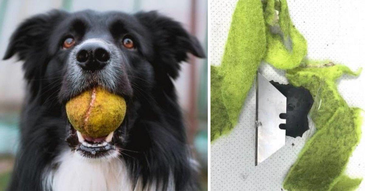 d1 21.png?resize=1200,630 - Danger For Dogs: Razor Blades Found Inside Tennis Balls
