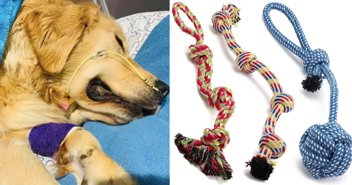 d3 18.png?resize=1200,630 - The Sad Owner Warns People About Rope Toys After his Golden Retriever's Death