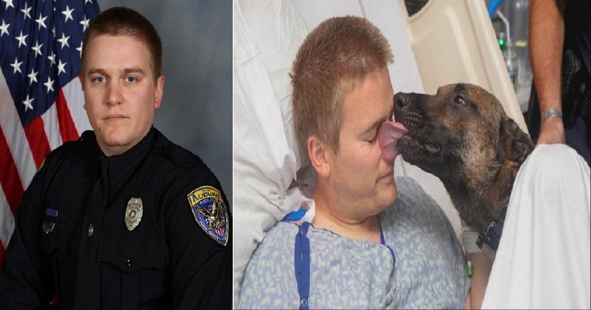 d3 9.jpg?resize=412,232 - Le chien de cet officier de police hospitalisé après un tir par balle lui a rendu visite pour le réconforter