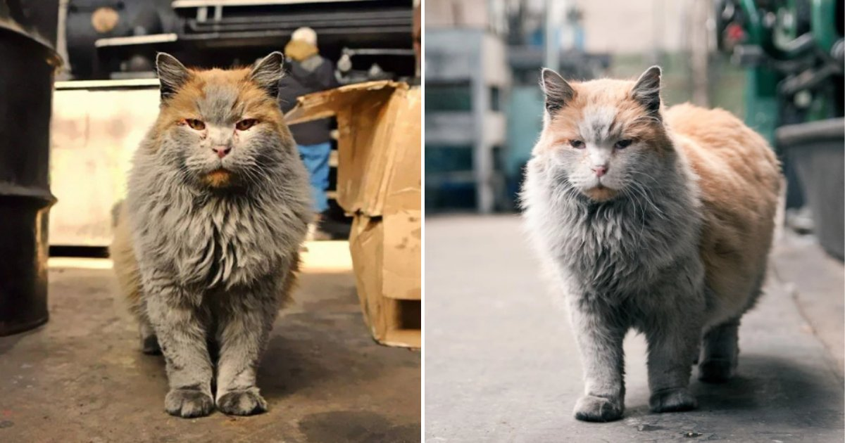 dirty2.png?resize=412,275 - Meet 'Dirt' The Railway Cat Who Always Looks Like He Needs A Shower