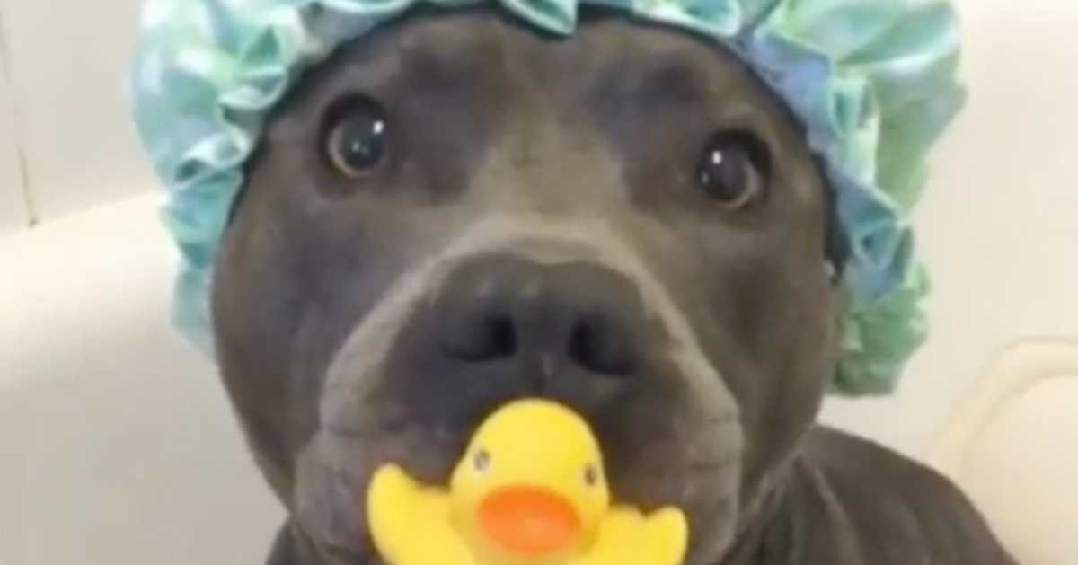 dog gifs.jpeg?resize=412,275 - The 50+ Most Hilarious Dog GIFs That Will Surely Make You Laugh