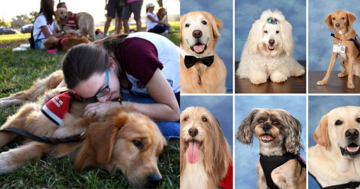 doggies.png?resize=1200,630 - School Features Therapy Dogs In Yearbook To Honor Them After Parkland Shooting