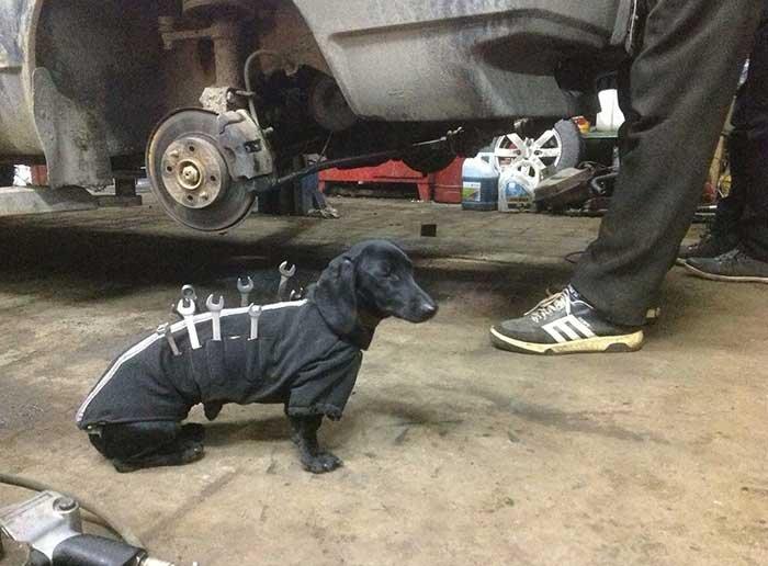 Dog Mechanic On The Job